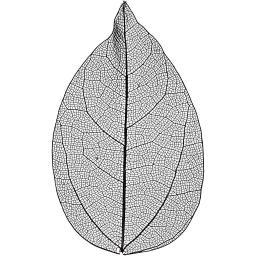 504494_1skeleton leaves black.jpg