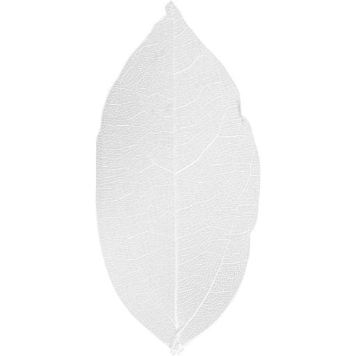 Skeleton Leaves, L: 6-8 cm, White, 20 pc, 1 Pack