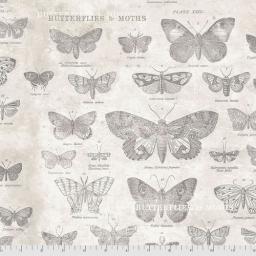 Butterflies - Parchment.jpg