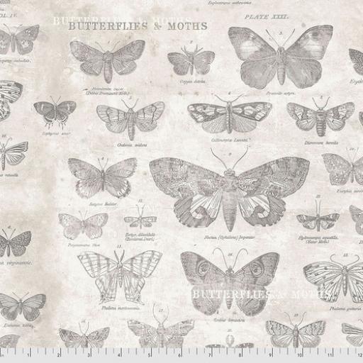 Tim Holtz® - Monochrome - Butterflies Parchment